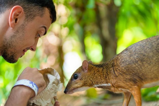 O cara alimenta kanchil com as mãos no zoológico.