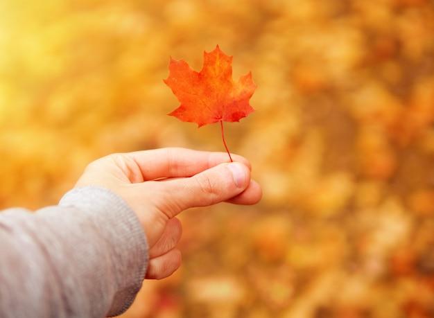 O cara segura os dedos uma pequena folha de bordo vermelho. paisagem de outono brilhante e colorido