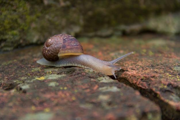 O caracol deslizando para baixo os tijolos antigos