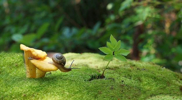 O caracol do jardim se arrasta para a floresta em cogumelos e musgo