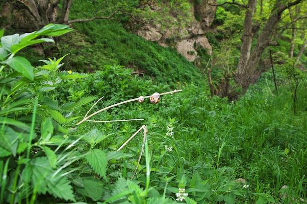 O caracol nas montanhas do cáucaso, armênia