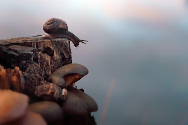 O caracol rasteja ao longo do toco perto do lago no outono.