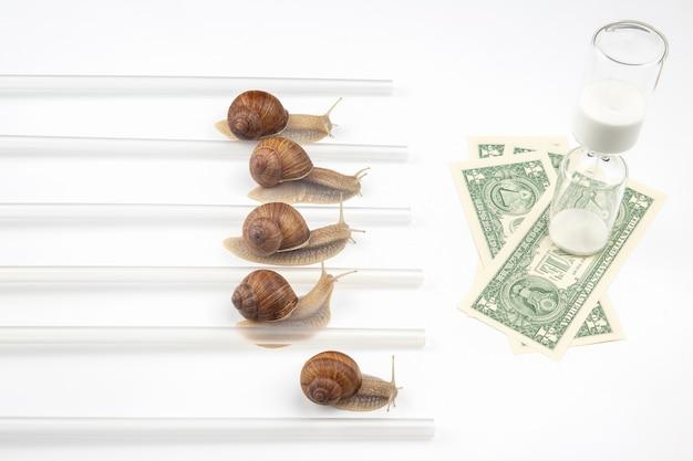 O caracol tem pressa em ganhar com rapidez pelo direito de receber dinheiro.