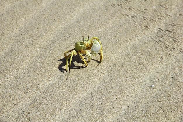 O caranguejo na baía de shuab, na ilha de socotra, oceano índico, iêmen