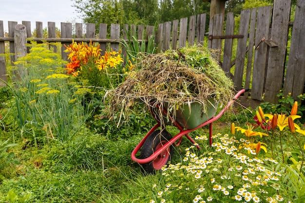 O carrinho do jardim está cheio de grama cortada. limpeza de ervas daninhas e ervas no jardim.