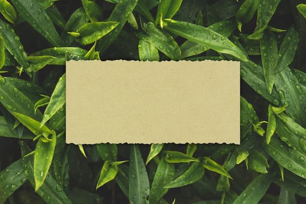 O cartão de papel em um fundo de folhas verdes molhadas copia o espaço.