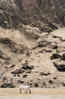 O cavalo branco pasta em um fundo de montanha rochosa o cavalo islandês é uma raça de cavalo cultivada em