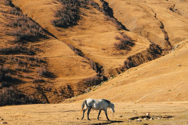 O cavalo come a grama amarela seca na colina com a montanha no fundo.