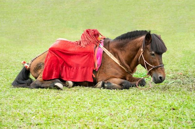 O cavalo diminuto em um campo de grama verde.