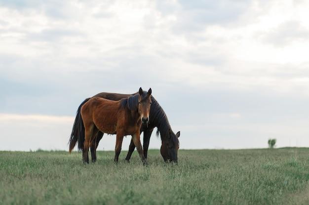 O cavalo pasta em um gramado verde em tempo nublado. céu nublado.