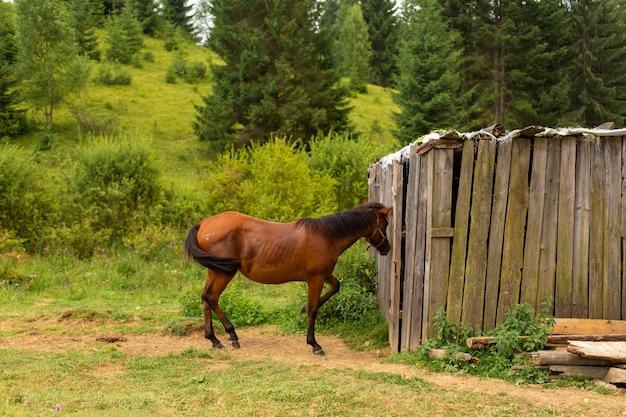 O cavalo pasta próximo a uma noz de madeira