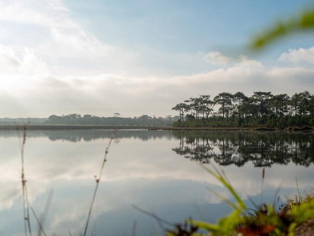 O cenário dos pântanos, pinheiros e do céu que reflete a superfície da água.