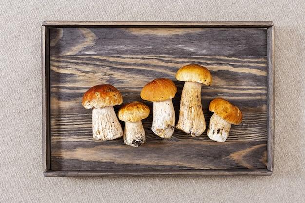 O cepa-de-bordéus cresce rapidamente no quadro de madeira ou na bandeja velha no espaço da cópia da tabela. vista de cima.
