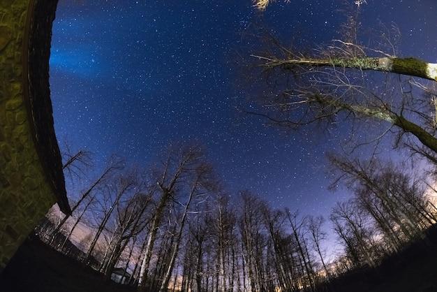 O céu estrelado da floresta