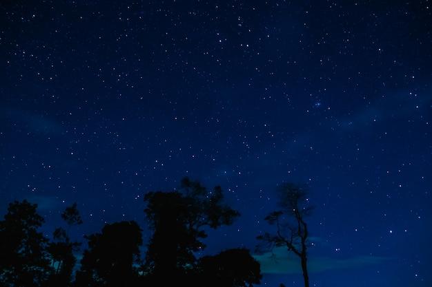 O céu estrelado na floresta da noite