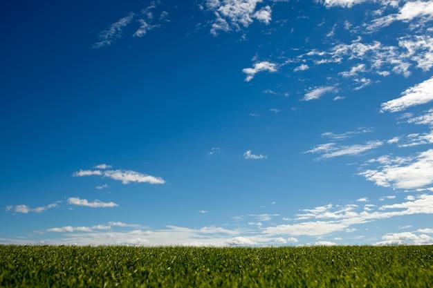 O céu sobre a grama verde. fundo