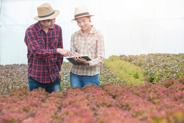O cientista asiático novo do homem verifica o controle de qualidade dos alimentos da agricultura com o fazendeiro asiático da mulher na fazenda de viveiro orgânica da estufa.