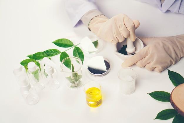 O cientista, doutor, faz a medicina alternativa da erva