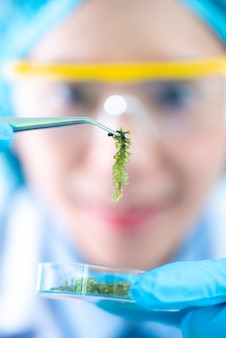O cientista, doutor, faz medicina de erva alternativa com ervas a natura orgânica