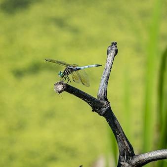 O close up atirou em uma libélula sob a luz do sol