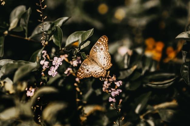 O close up disparou de uma borboleta branca, marrom empoleirada em uma planta verde com flores cor-de-rosa