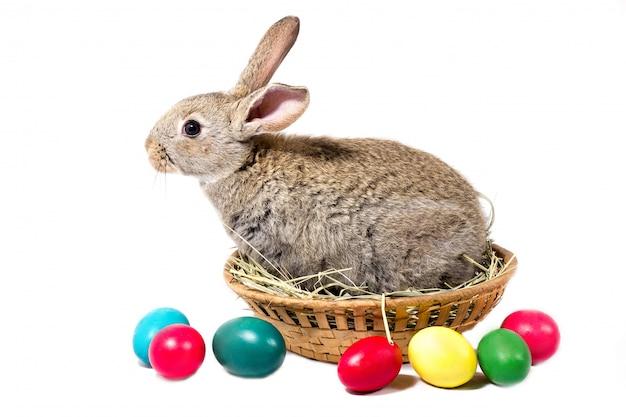 O coelhinho da páscoa cinzento senta-se em uma cesta, isolado, placa para o feriado da páscoa, conceito à páscoa.