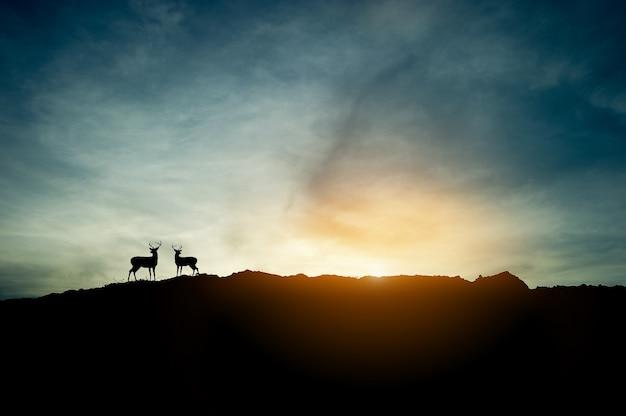 O conceito da silhueta do por do sol e dois cervos na montanha.
