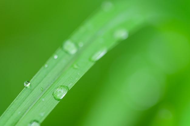 O conceito de amar o ambiente verde do mundo gotas de água nas folhas fundo desfocado bokeh