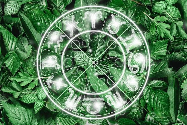 O conceito de horóscopo, um círculo com os signos do zodíaco em um fundo de vegetação, astrologia. consultando as estrelas.
