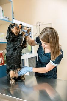 O conceito de medicina, cuidados com animais de estimação e pessoas - médico veterinário e cão na clínica veterinária