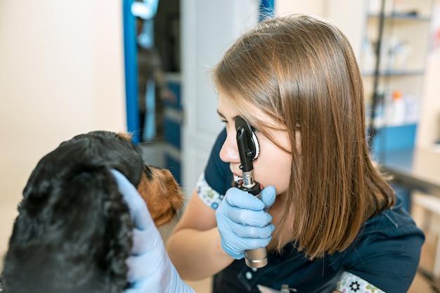 O conceito de medicina, cuidados com animais e pessoas - médico veterinário e cão na clínica veterinária