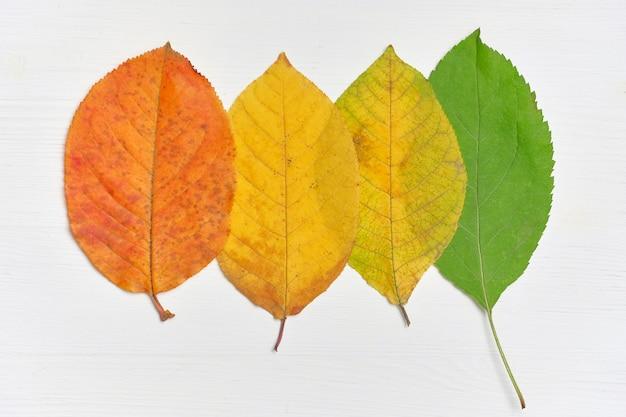 O conceito de mudar o verão para o outono de folhas verdes para secas e amarelas.