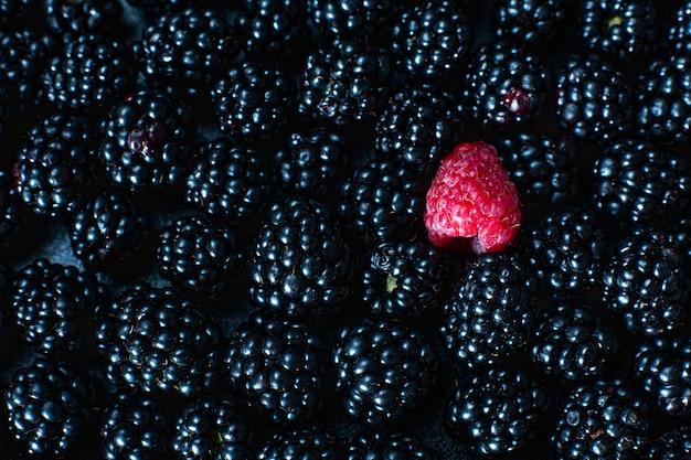 O conceito de singularidade. não é como os outros. framboesa vermelha em uma pilha de amoras pretas