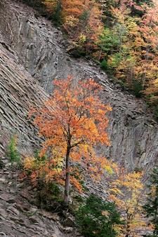 O conceito de solidão. árvore solitária de outono na encosta de uma montanha rochosa.
