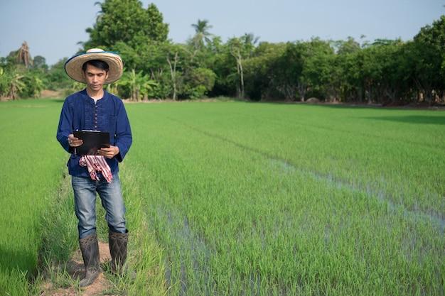 O corpo inteiro de um agricultor asiático usa traje tradicional em pé e segurando um papelão em uma fazenda de arroz verde