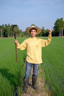 O corpo inteiro de um agricultor asiático usa uma camisa amarela em pé e segurando uma ferramenta de foice em uma fazenda de arroz