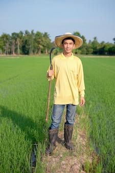 O corpo inteiro de um agricultor asiático usa uma camisa amarela em pé e segurando uma foice em uma fazenda de arroz verde