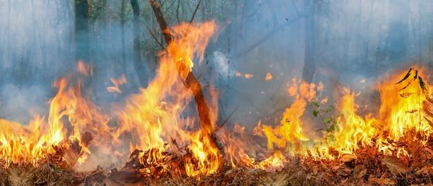 O desastre de incêndios na floresta amazônica está queimando a uma taxa que os cientistas nunca viram antes.