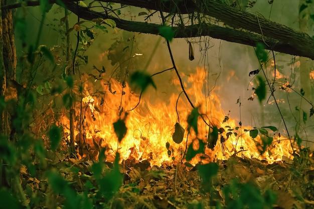 O desastre de um incêndio na floresta tropical da amazônia está queimando a uma taxa que os cientistas nunca viram antes.