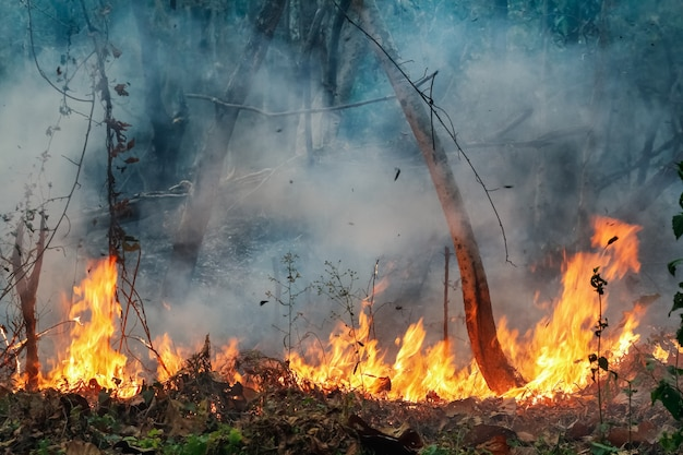 O desastre do incêndio na floresta tropical da amazônia está queimando a uma taxa que os cientistas nunca viram antes.