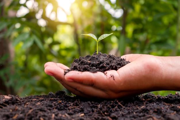 O dia mundial do meio ambiente e o conceito de reflorestamento salvam o meio ambiente com a mão de uma menina segurando uma pequena árvore para plantar no solo