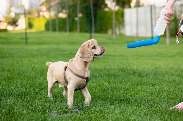 O dono do cachorro dá água para seu cachorro do bebedouro enquanto caminha no parque da cidade.