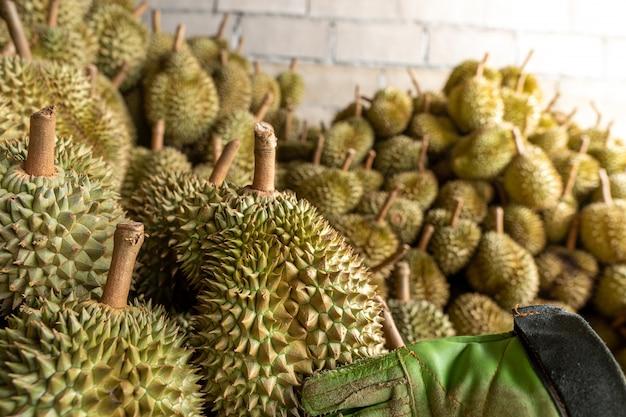 O durian sazonal está sendo vendido para traders para exportação para a china.
