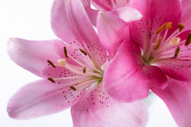 O estame e o pistilo de lírios cor-de-rosa da flor fecham-se acima. abstrato natureza.