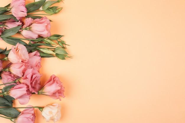 O eustoma violeta e branco brota em um close claro da parede.