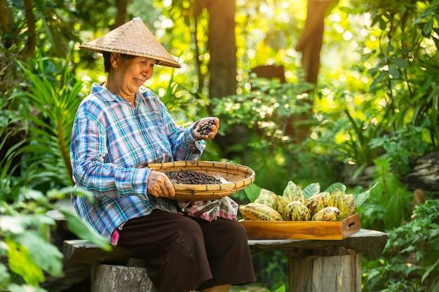 O fazendeiro asiático da mulher prende a fruta de cacau na caixa com um sorriso feliz.