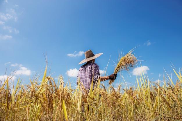 O fazendeiro da estação da colheita está para trás no campo na luz solar.