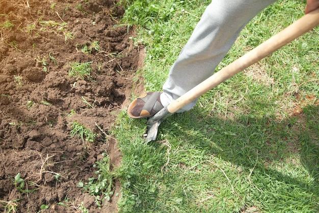 O fazendeiro escava o solo com uma pá no jardim.