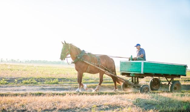 O fazendeiro está montando seu cavalo. transporte de carretas.