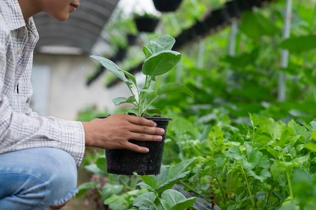 O fazendeiro novo que escolhe vegetais orgânicos frescos forma seu jardim.